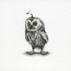 Saw-Whet Owl ~ Courtney Brims