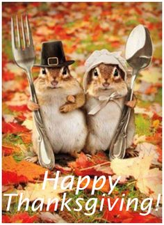 Thanksgiving chipmunks