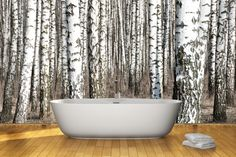 Birch tree wall mural (removable!)