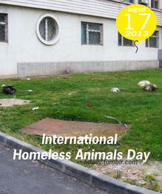 International Homeless Animals Day!