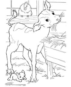 Cow Coloring page | Calf in the barn eating hay