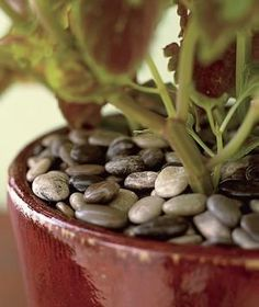 Decorate and insulate potted plants by adding a layer of pretty pebbles on top of the soil.