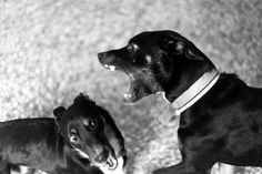 DANNY AND TOBY !!!     #bw  #blackandwhite #dogs # toby #danny #street #athens #photography