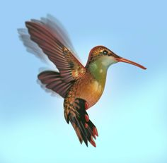 Hummingbird Hummingbird, Animals, Animales, Animaux, Hummingbirds, Animal, Animais