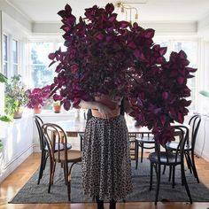 my scandinavian home: Coleus / China Star / Palletblad in the arms of Malin Brostad in her Charming Swedish Home Indoor Climbing Plants, Indoor Plants, Potted Plants, Garden Plants, Teal Wall Colors, China Rose, Pot Plante, House Plants Decor, Swedish House