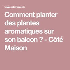 Comment planter des plantes aromatiques sur son balcon ? - Côté Maison