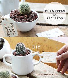 Cactus en tazas: DIY ideal para dar de recuerdito.