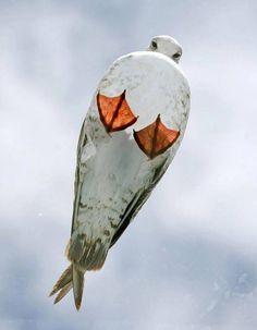 beach glass seagull - Google Search