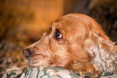 Hundespeichel: Heilmittel oder ein unterschätztes Gesundheitsrisiko?