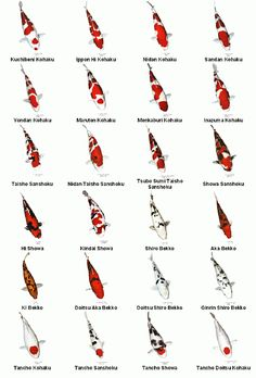 Different types of koi chart koi ponds pinterest koi for Types of pond design