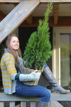 The Thuja delivers visual appeal all year round through its wonderful green foliage