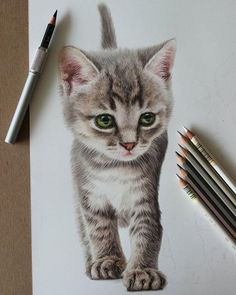 15 Amazing Drawings that Will Blow Your Mind 3d Drawings, Amazing Drawings, Animal Drawings, Drawing Sketches, Pencil Drawings, Drawing Ideas, Realistic Drawings Of Animals, Colorful Drawings, Amazing Art