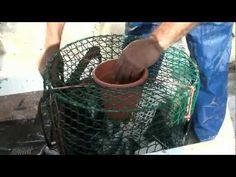 Pescando pulpos en el Levante Almeriense. Sabor a mar pesca pulpos con Alonso Quesada - YouTube