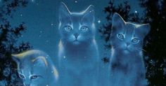 What is Your Ideal Female Warrior Cat Name?---Female Cats Only   PlayBuzz