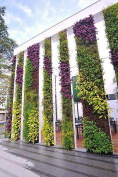 #JardinVertical