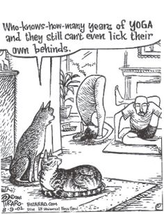 Yoga seen through the eyes of cats... :))