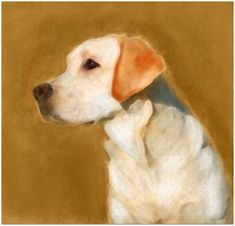 Free Pet Portrait and Animal Painting Lessons - Teach yourself how to paint pet portraits, farm animals, birds and wildlife. Learn at home and at your own pace. Follow any of two dozen free, online tutorials by professional artists.
