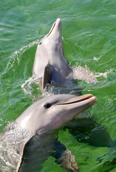 Delfines, most beautiful animals in the World.