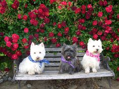 WesTies and a Cairn! <3