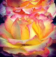 Nick Knight: série Flores do Jardim do fotográfo