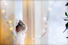 miezekatzen:    waiting for Santa