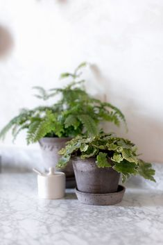 Bergs Potter grey plant pots uk, ethically made grey terracotta plant pots Hanging Plants, Potted Plants, Indoor Plants, Terracotta Plant Pots, Natural Homes, Green Life, Clay Pots, Natural Materials, Interior Decorating