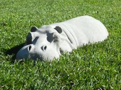 Hippo lawn ornament. Hand made lawn craft