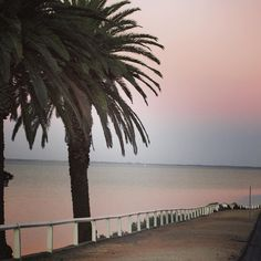 #pinksky #beach #water #trees #palmtrees #easternbeach #geelong #australia by lover_of_succulents http://ift.tt/1JtS0vo