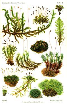ferns and moss. botany study.