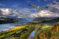 """""""0046 Columbia River Gorge With Gull"""" by Vincent Louis, Vancouver Washington // Imagekind.com – Buy stunning, museum-quality fine art prints, framed prints, and canvas prints directly from independent working artists and photographers."""