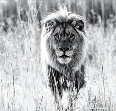 We are still loving these amazing photos taken by fine art photographer David Yarrow. If you'd like to follow his work, you can find him on instagram under @davidyarrow. He really has a fantastic eye.