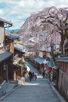 Buddhist Temple, Cherry Blossom Season, Bamboo Tree, Japanese Streets, Famous Places, Great View, Kyoto