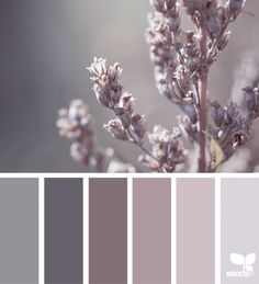 Color Spring Color Spring Design Seeds Color Palettes Posted Daily For All Who Love Color Inspiration And Ideas For A Decorating Colour Palette In Soft Pinky Grey Design Seeds, Colour Pallette, Color Combos, Color Trends, Purple Palette, Neutral Palette, Pantone, Elephants Breath, Interior Paint Colors