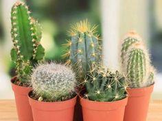 50-plantas-de-la-suerte-medicina-suerte-exito-amorhttp://hagamoscosas.com/50-plantas-de-la-suerte-amor-y-exito/ siguenos en facebook! #hagamoscosas