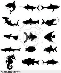 vis - zeedieren