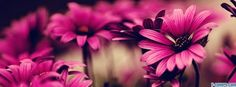 flowers pink 5 facebook cover