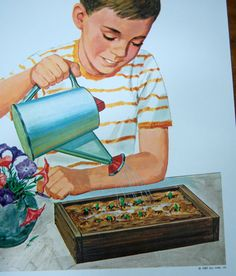 School Poster, Growing Seeds, Science Teaching Print, 1967, Educational Illustration