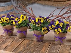 Pansies are a great supply in the kitchen and the craft room and can be made into all sorts of pansy crafts, from delectable donuts to homemade bath bombs. Party Centerpieces, Flower Centerpieces, Table Decorations, Party Favors, May Day Baskets, Homemade Bath Bombs, Large Flowers, Exotic Flowers, Purple Flowers