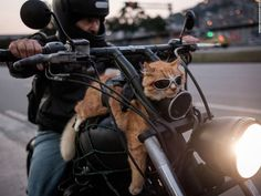 cats on motorcycle - Google Search