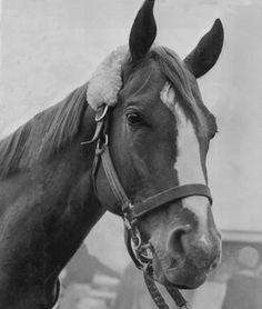 "1960 Kentucky Derby winner ""Venetian Way"" Thoroughbred Preakness Stakes, Derby Horse, Derby Winners, Sport Of Kings, Thoroughbred Horse, Racehorse, Courses, Horse Racing, Kentucky Derby"