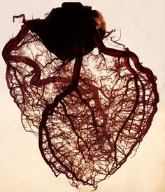 The human heart stripped off all its fat and muscle, leaving only the angel veins exposed; something utterly beautiful.