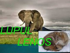 YouTube Moldova, Veronica, Elephant, Youtube, Animals, Animales, Animaux, Elephants, Animal