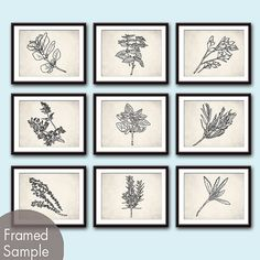 Herb Garden Collection (Series A2) - Set of 9 - Art Prints (Featured in White Stone Background and Black) (Customizable colors)    Set includes 9