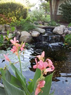 """Minnesota.  Small backyard pond and waterfall in summer.  Pink flowers called canas are growing directly in the water. Inspired Design Landscapes Inc.  """"from inspiration to installation!"""" www.idl-inc.com"""