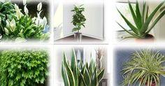 6 Piante che ricaricano di ossigeno ed eliminano tossine dalla nostra casa