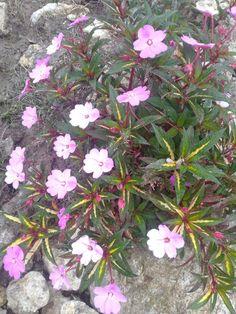 Flowers, Plants, Garden, Garten, Planters, Royal Icing Flowers, Gardening, Outdoor, Flower