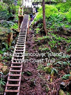 """A long set of stairs on Vancouver Island's West Coast Trail"""