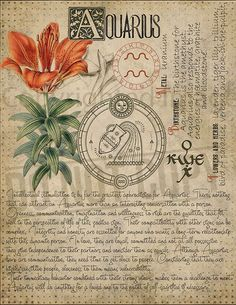 7 pages set about AQUARIUS Astrological Sign Correspondences. They are an ideal addition to your own Wicca Book of Shadows. Age Of Aquarius, Zodiac Signs Aquarius, Astrology Zodiac, Astrology Signs, Astrological Sign, Astrology Chart, Wiccan Spells, Magick, Numerology Horoscope