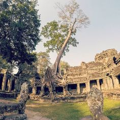 Reposting @chewy_travels: Sometimes nature really blows me away. #angkorwat #siemreap #cambodia🇰🇭