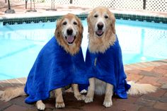 Brie and Ben trying out their new Dry Coats from Judie
